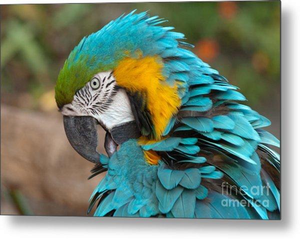 Blue-green-yellow Macaw Metal Print by Svetlana Ledneva-Schukina