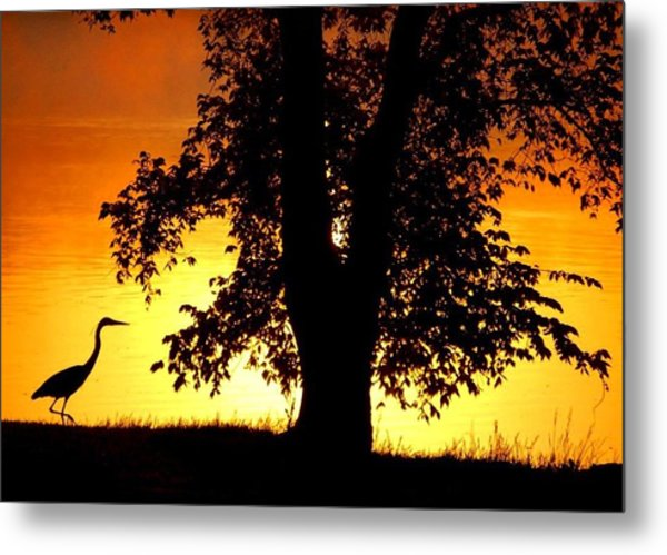Blue Heron At Sunrise Metal Print