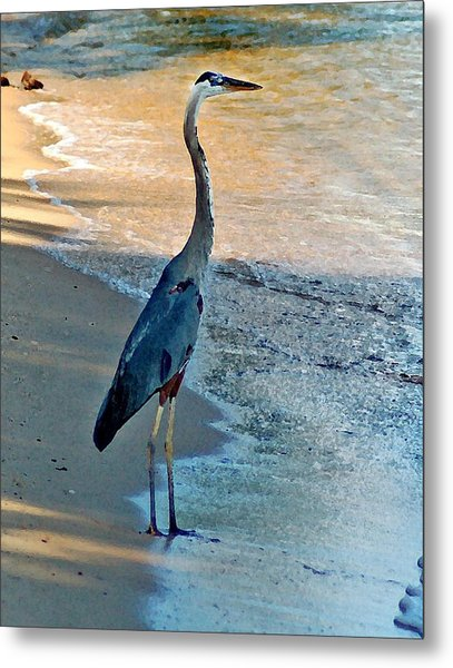 Blue Heron On The Beach Close Up Metal Print