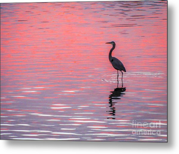 Blue Heron - Pink Water Metal Print