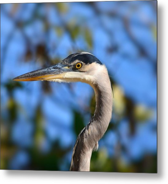 Blue Heron Profile Metal Print