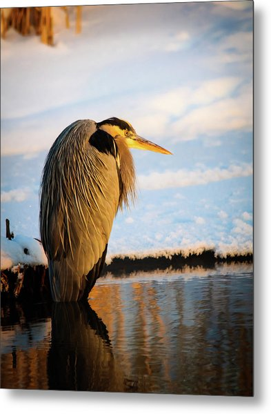 Metal Print featuring the photograph Blue Heron Resting by Bryan Carter