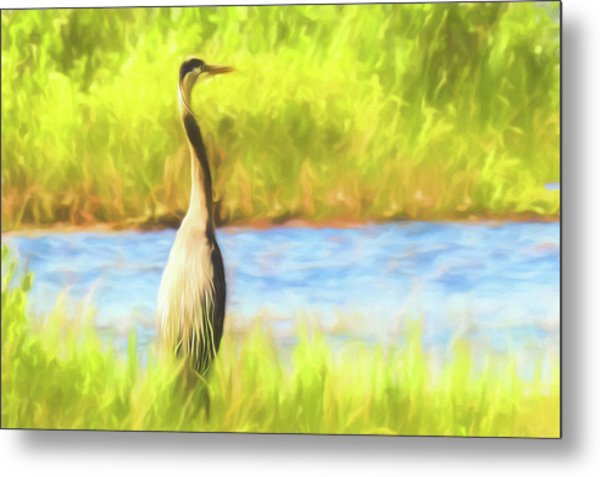 Blue Heron Standing Tall And Alert Metal Print