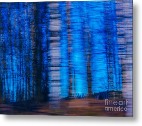 Blue Hour In Birch Forest Metal Print