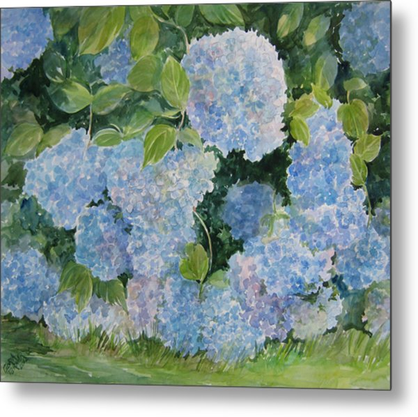 Blue Hydrangea 2 Sold Metal Print