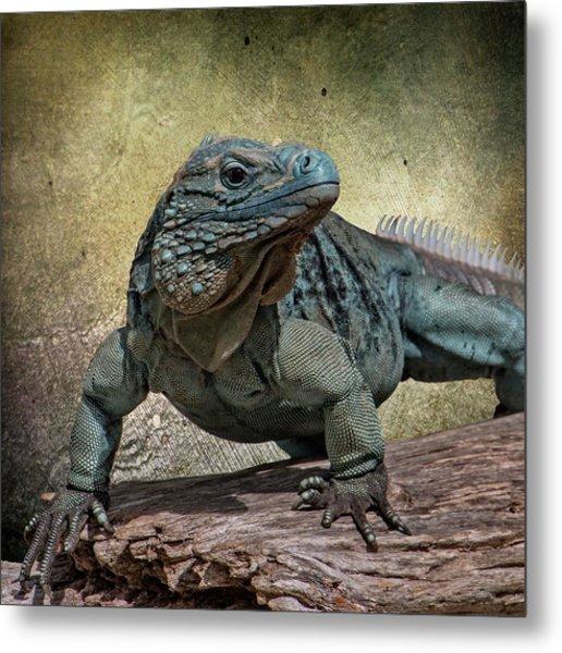 Blue Iguana Metal Print