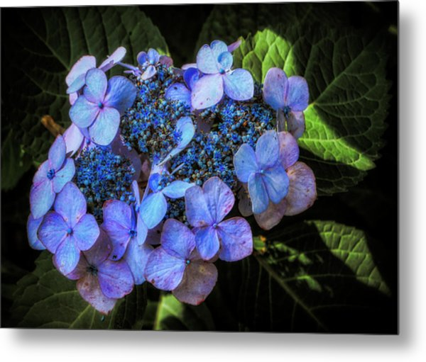 Blue In Nature Metal Print