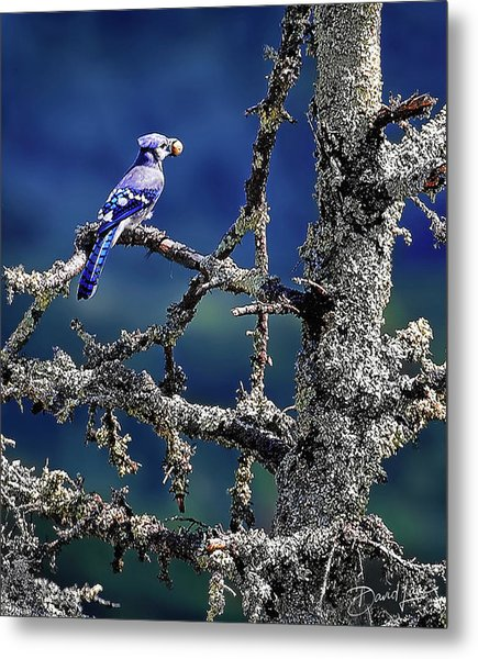 Blue Jay Mountain Metal Print