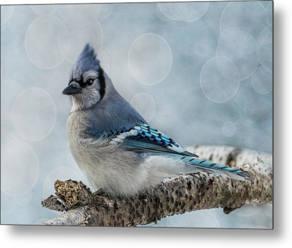 Blue Jay Perch Metal Print