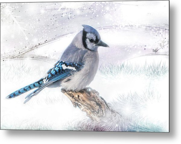 Blue Jay Snow Metal Print