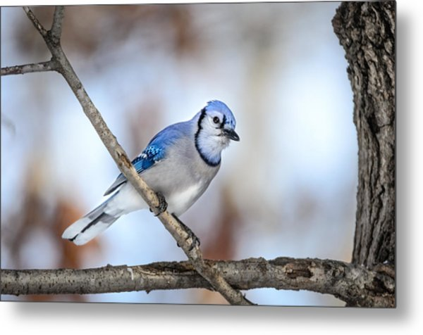 Singing My Song Metal Print