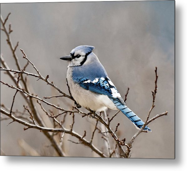 Blue Jay Way Metal Print