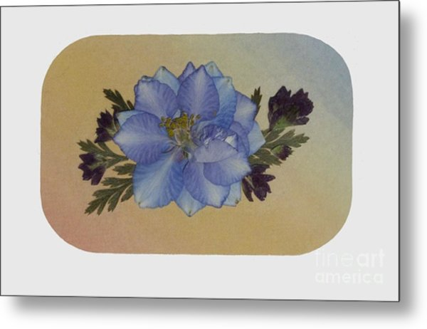 Blue Larkspur And Oregano Pressed Flower Arrangement Metal Print