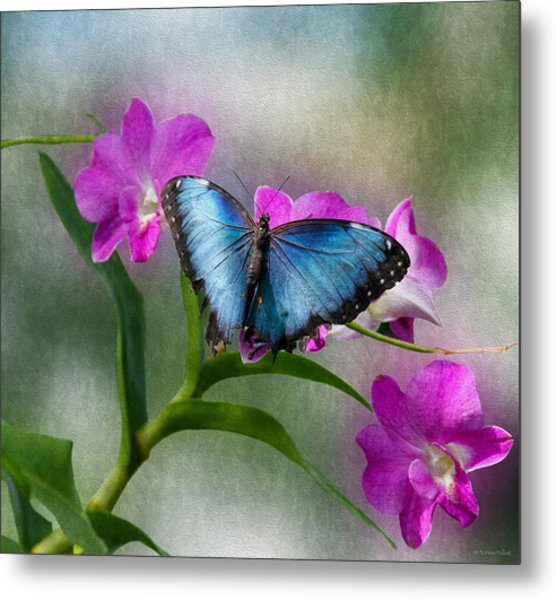 Blue Morpho With Orchids Metal Print