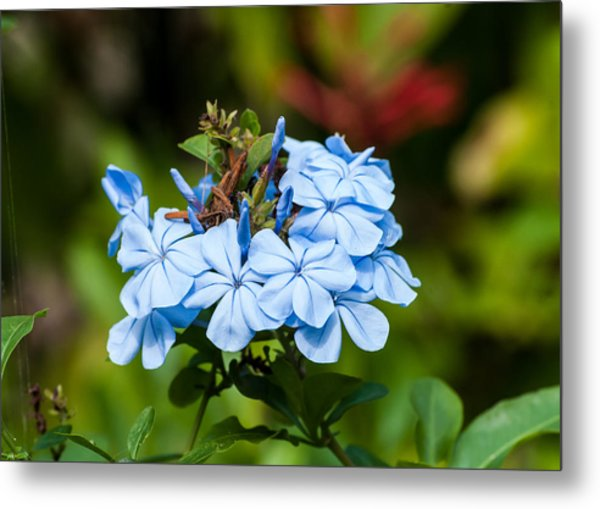 Blue Peddles Metal Print