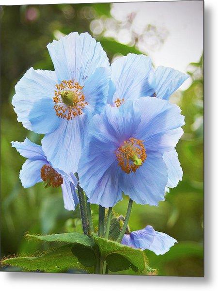 Blue Poppy Metal Print