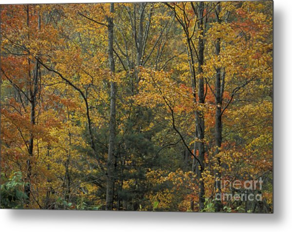 Blue Ridge Color Metal Print by Stan and Anne Foster