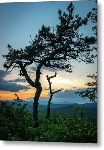 Blue Ridge Mountains Dr. Tree Metal Print