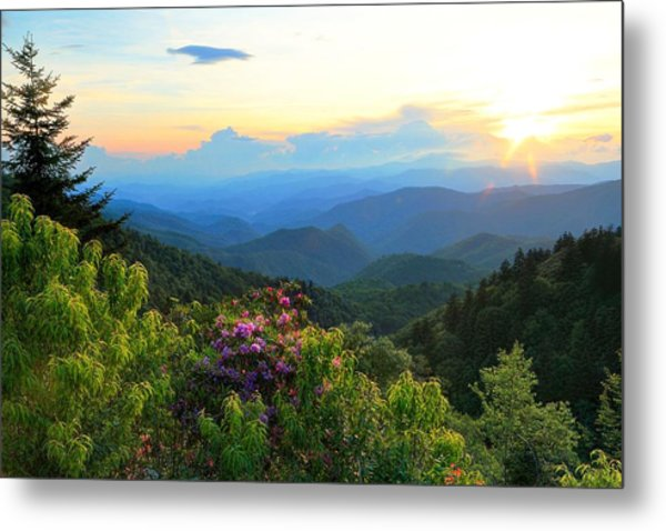 Blue Ridge Parkway And Rhododendron  Metal Print