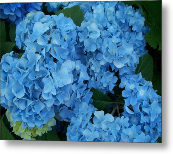 Blue Metal Print by Rosanne Bartlett