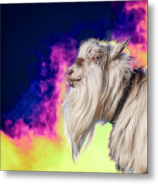 Blue The Goat In Fog Metal Print