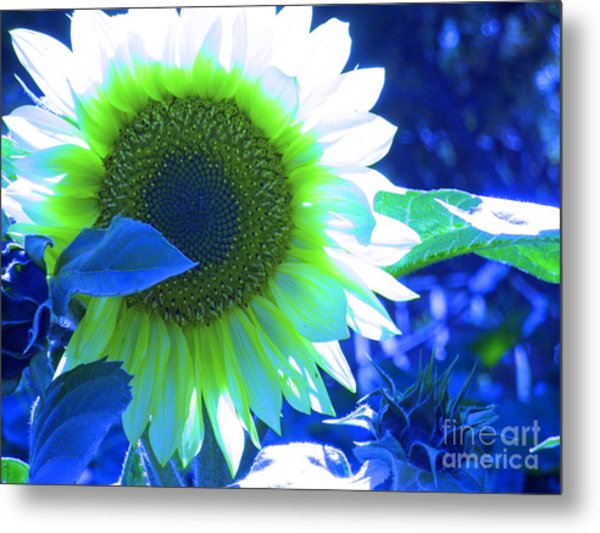 Blue Tinted Sunflower Metal Print