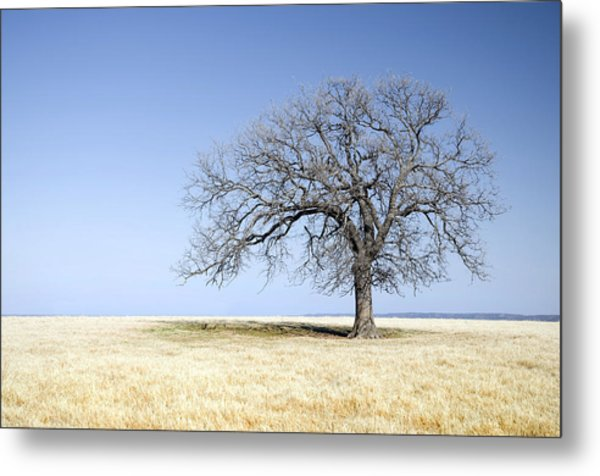 Blue To Remember Metal Print
