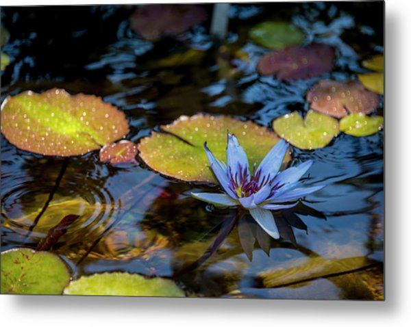 Blue Water Lily Pond Metal Print