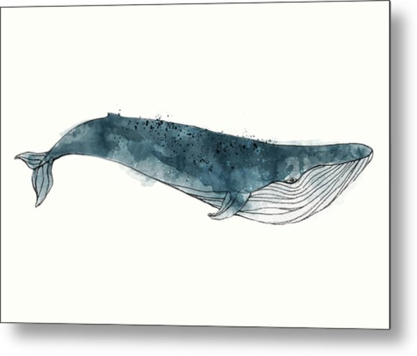 Blue Whale From Whales Chart Metal Print