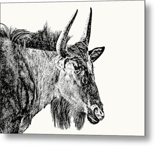 Blue Wildebeest Close-up Metal Print