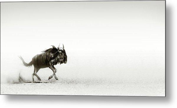 Blue Wildebeest In Desert Metal Print