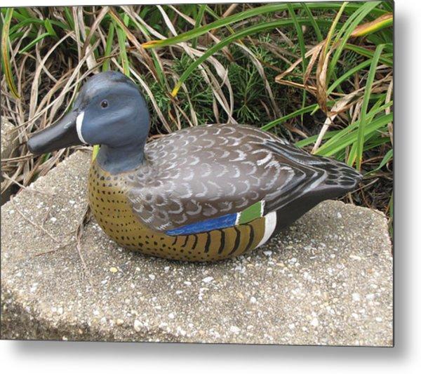 Blue-winged Duck Metal Print