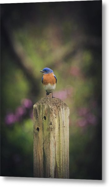 Metal Print featuring the photograph Blue With A Bit Of Pink by Robert L Jackson