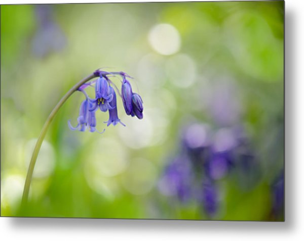 Bluebell Beauty Metal Print