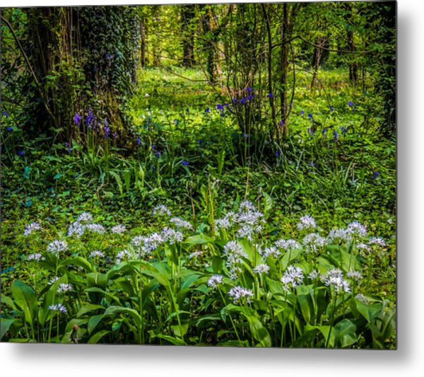 Bluebells And Wild Garlic At Coole Park Metal Print