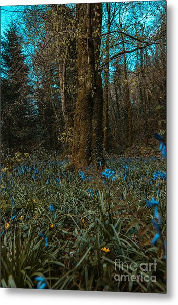Bluebells In Lismore Forest 2 Metal Print