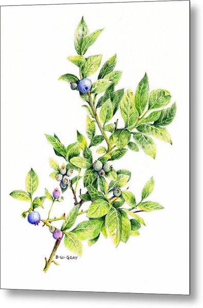 Blueberry Branch Metal Print
