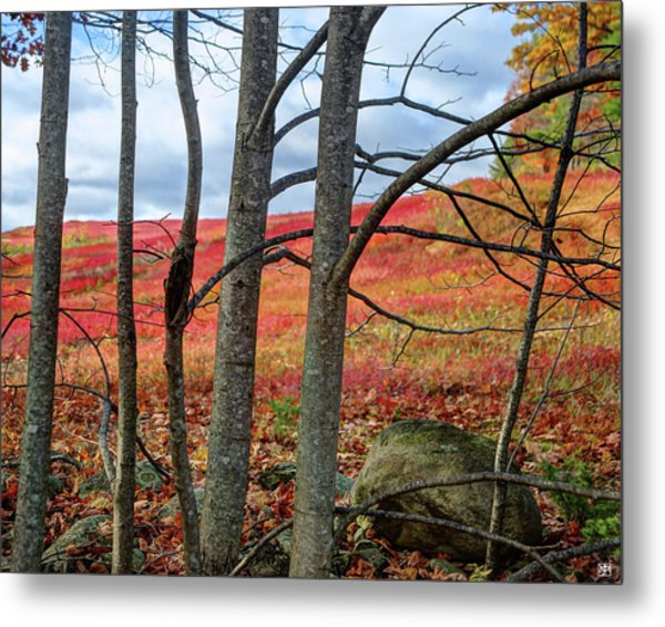 Blueberry Field Through The Wall - Cropped Metal Print