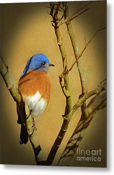 Bluebird Waiting For Spring Metal Print