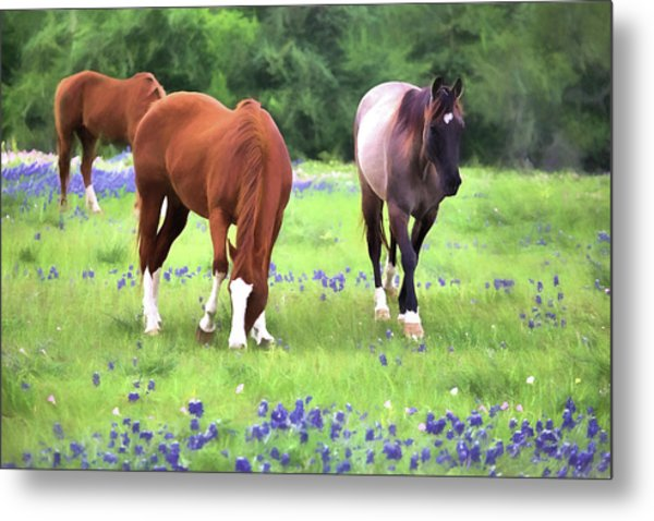 Bluebonnets And Horses Metal Print by JC Findley