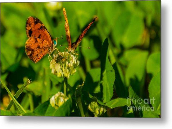 Bluehead Butterfly Metal Print