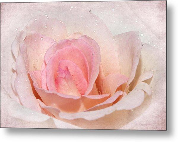 Blush Pink Dewy Rose Metal Print