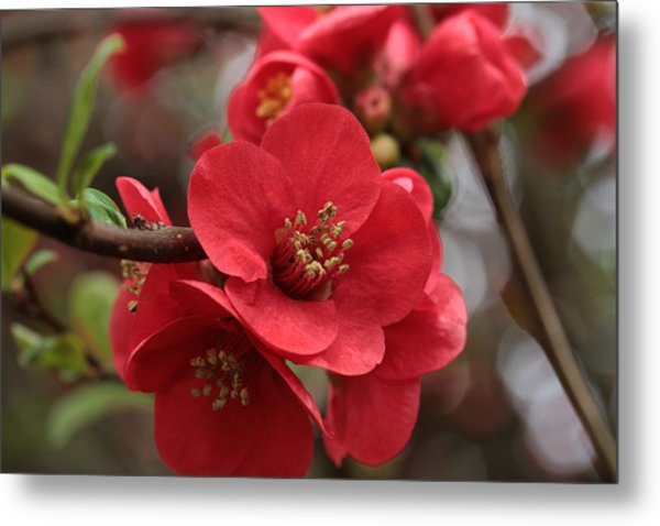 Blushing Blooms Metal Print