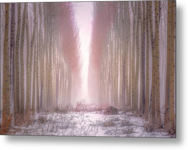 Boardman Tree Farm  Metal Print