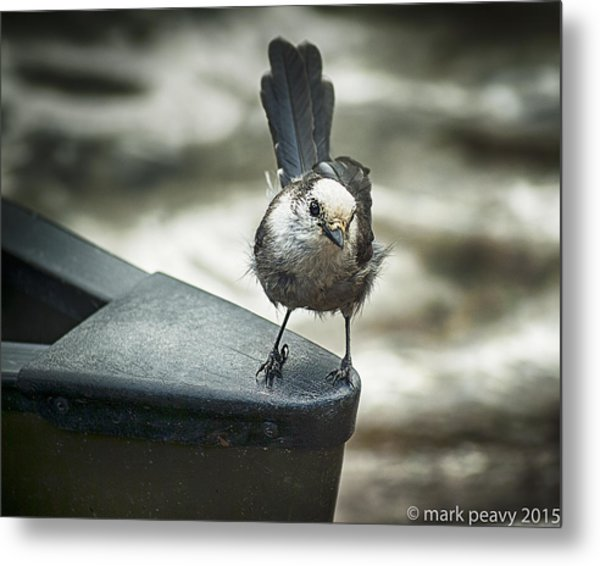 Boat Sparrow Metal Print