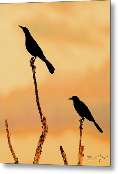 Boat Tailed Grackles Metal Print