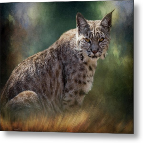 Bobcat Gaze Metal Print