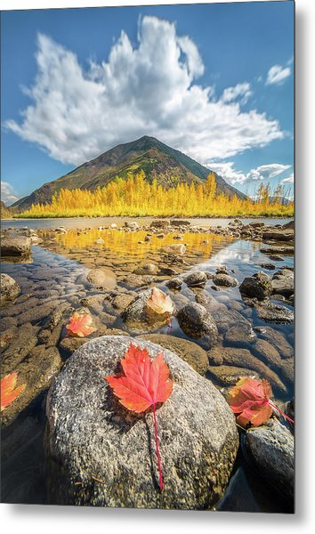Metal Print featuring the photograph Bold Fall Colors // Flathead River, Glacier National Park  by Nicholas Parker