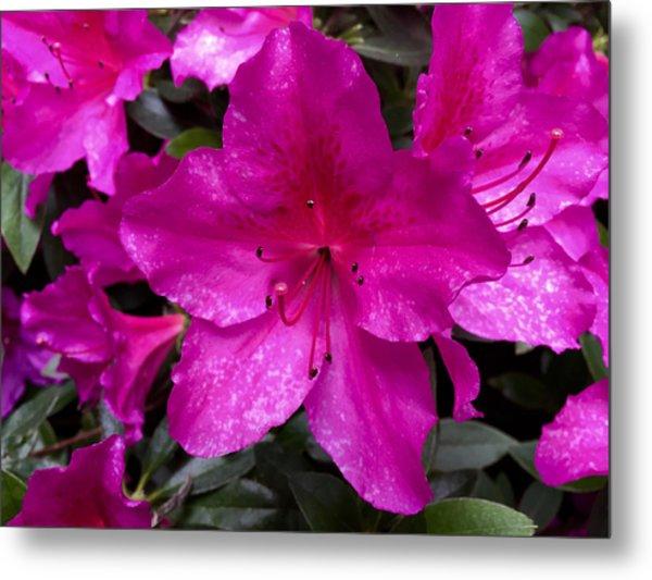 Bold Pink Flower Metal Print