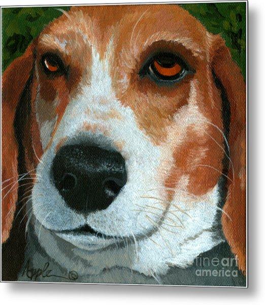 Bonnie - Beagle Painting Metal Print by Linda Apple